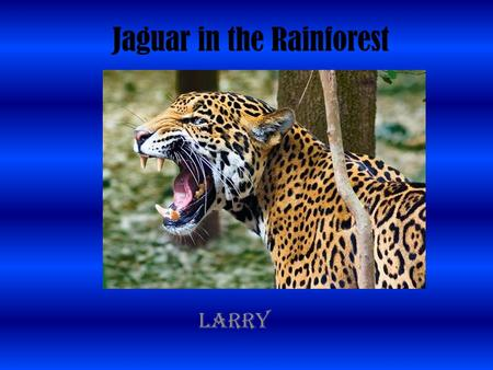 Jaguar in the Rainforest Larry. Introduction Rainforest are important. Rainforest are located near the equator. Rainforest have heat and rain. They are.