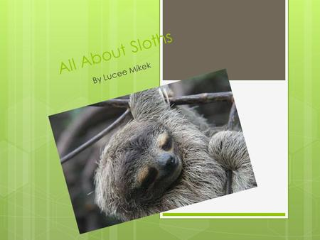 All About Sloths By Lucee Mikek. Why I picked It  I picked sloths because they are so cute and adorable.