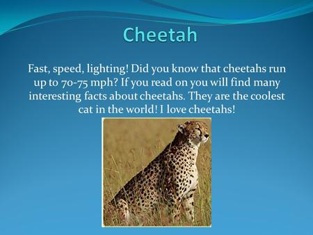 Fast, speed, lighting! Did you know that cheetahs run up to 70-75 mph? If you read on you will find many interesting facts about cheetahs. They are the.