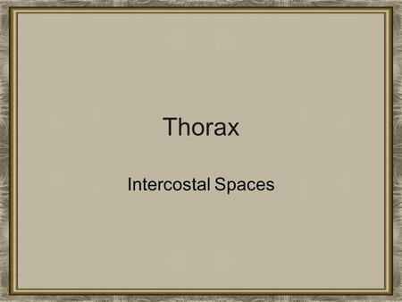 Thorax Intercostal Spaces.