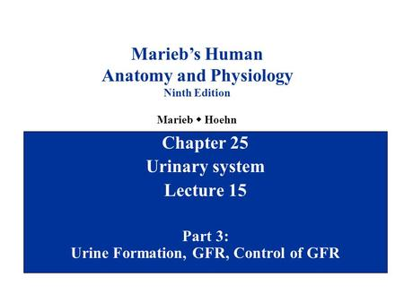 Chapter 25 Urinary system Lecture 15 Part 3: Urine Formation, GFR, Control of GFR Marieb's Human Anatomy and Physiology Ninth Edition Marieb  Hoehn.