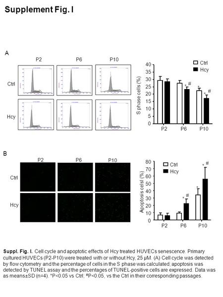 P2P6P10 Hcy Ctrl P2P6 P10 Ctrl Hcy Supplement Fig. I A B Suppl. Fig. I. Cell cycle and apoptotic effects of Hcy treated HUVECs senescence. Primary cultured.