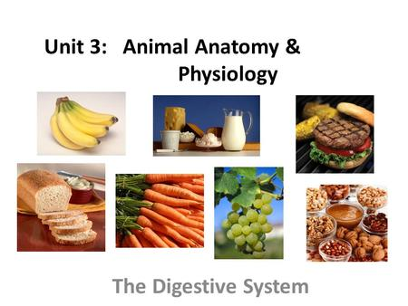 Unit 3: Animal Anatomy & Physiology The Digestive System.