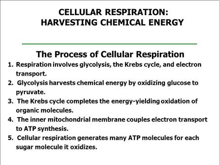 CELLULAR RESPIRATION: HARVESTING CHEMICAL ENERGY The Process of Cellular Respiration 1.Respiration involves glycolysis, the Krebs cycle, and electron transport.