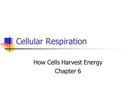 How Cells Harvest Energy Chapter 6