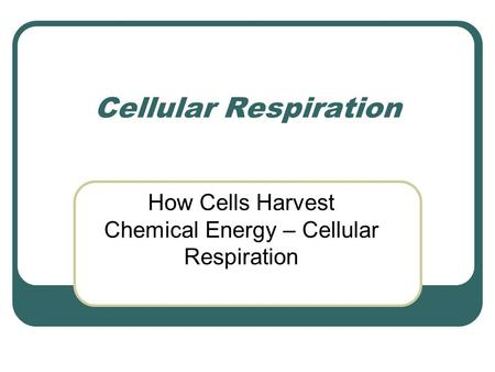 Cellular Respiration How Cells Harvest Chemical Energy – Cellular Respiration.