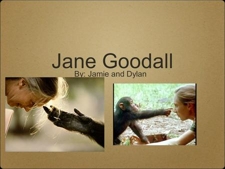 Jane Goodall By: Jamie and Dylan. Who is Jane Goodall Jane Goodall is a female anthropologists who conducted a 35 year study about social interactions.