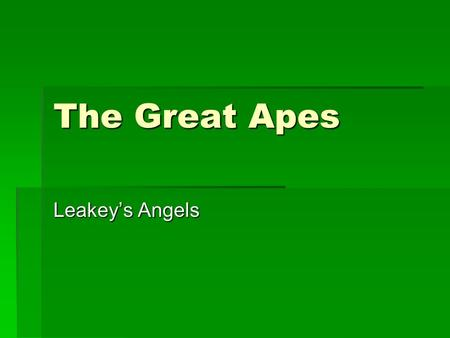 The Great Apes Leakey's Angels. Louis Seymour Bazett Leakey (1903-1972) Louis Seymour Bazett Leakey (1903-1972)  British / Kenyan archaeologist and anthropologist.