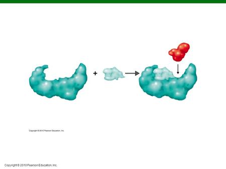 Copyright © 2010 Pearson Education, Inc.. Figure 5.4a The Mechanism of Enzymatic Action.