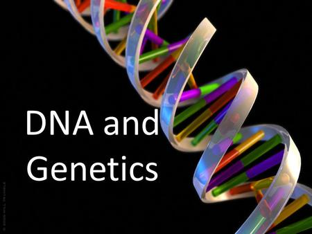DNA and Genetics. The Structure of DNA Chromosomes are made of DNA. Each chromosome contains thousands of genes. The sequence of bases in a gene forms.