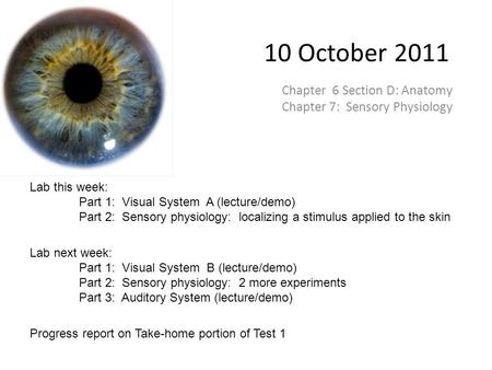 10 October 2011 Chapter 6 Section D: Anatomy Chapter 7: Sensory Physiology Lab this week: Part 1: Visual System A (lecture/demo) Part 2: Sensory physiology: