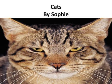 Cats By Sophie. Table of Contents Introduction…………………………………….Page 3 Chapter 1:Taking Care Of A Cat………..Page 4 Chapter 2:Grooming………………………..Page 5 Chapter.