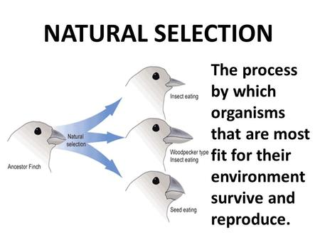 NATURAL SELECTION The process by which organisms that are most fit for their environment survive and reproduce.