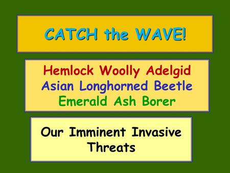 Hemlock Woolly Adelgid Asian Longhorned Beetle Emerald Ash Borer CATCH the WAVE! Our Imminent Invasive Threats.