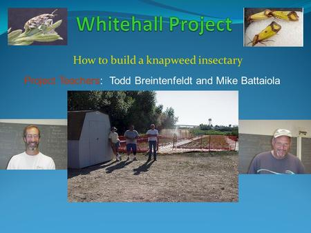 How to build a knapweed insectary Project Teachers: Todd Breintenfeldt and Mike Battaiola.