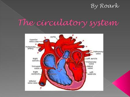 Circulatory System - the system of blood, vessels, and heart concerned with circulation of body fluids. Plasma - the watery part of blood cell that carries.