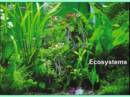 Ecosystems Ecosystem:  All the organisms in a community plus abiotic factors  ecosystems are transformers of energy& processors of matter.  Ecosystems.