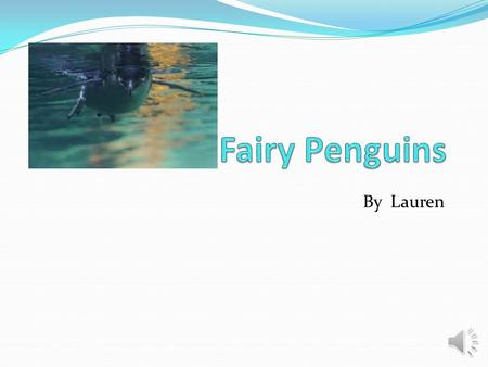 By Lauren Habitat  The Fairy penguin (also known as Little Blue), needs its surroundings to be very cold.  Fairy penguins live in the southern hemisphere.