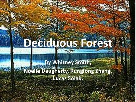 Deciduous Forest By Whitney Smith, Noelle Daugherty, Runglong Zhang, Lucas Solak.
