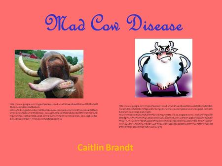 Mad Cow Disease Caitlin Brandt  3&tbm=isch&tbnid=SBeGwN- sN8InuM:&imgrefurl=http://s298.photobucket.com/albums/mm247/xonistica/%3Facti.