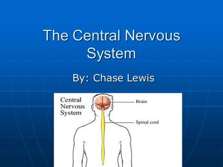 The Central Nervous System By: Chase Lewis. Central Nervous System The two main parts of the central nervous system are the brain and spinal cord. The.
