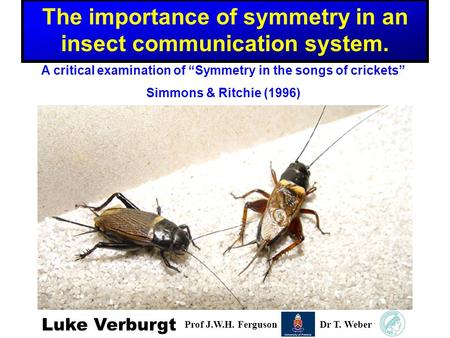 "Luke Verburgt Prof J.W.H. FergusonDr T. Weber A critical examination of ""Symmetry in the songs of crickets"" Simmons & Ritchie (1996) The importance of."