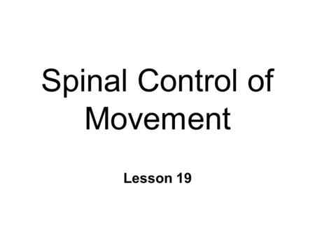 Spinal Control of Movement Lesson 19. Anatomy n Ventral Spinal Cord l Topographic organization n Alpha motor neurons n Spinal interneurons n Striate muscle.