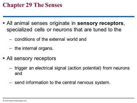 Chapter 29 The Senses  All animal senses originate in sensory receptors, specialized cells or neurons that are tuned to the –conditions of the external.