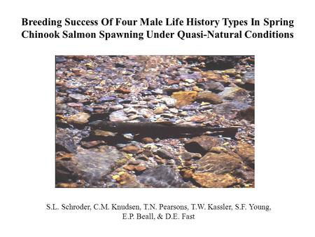 S.L. Schroder, C.M. Knudsen, T.N. Pearsons, T.W. Kassler, S.F. Young, E.P. Beall, & D.E. Fast Breeding Success Of Four Male Life History Types In Spring.