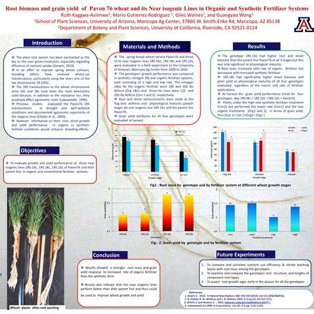 Root biomass and grain yield of Pavon 76 wheat and its Near isogenic Lines in Organic and Synthetic Fertilizer Systems Ruth Kaggwa-Asiimwe 1, Mario Gutierrez-Rodriguez.