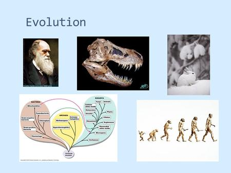 Evolution. Reminder  Read chapter 22  Darwin, Lamarck, Lyell, and Wallace  Resistance to evolution  Pre-Darwin views  On The Origin of Species by.