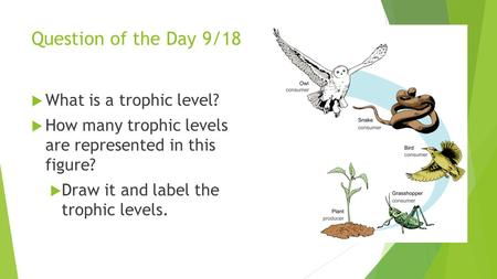 Question of the Day 9/18 What is a trophic level?