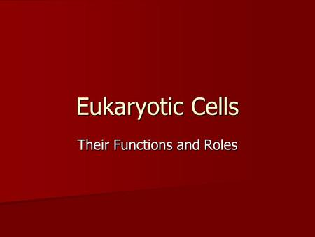 Eukaryotic Cells Their Functions and Roles. What is a Eukaryotic Cell? Eukaryotic cells are found in many places. Eukaryotic cells are found in many places.
