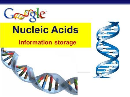 Regents Biology Nucleic Acids Information storage.