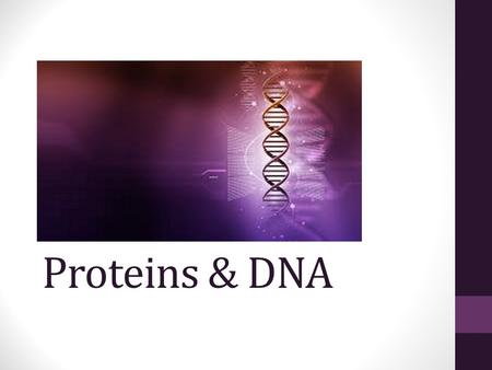 Proteins & DNA. Amino Acids: the building blocks of Proteins.