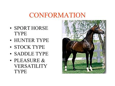CONFORMATION SPORT HORSE TYPE HUNTER TYPE STOCK TYPE SADDLE TYPE PLEASURE & VERSATILITY TYPE.
