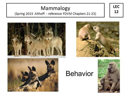 Behavior Mammalogy (Spring 2015 Althoff - reference FDVM Chapters 21-23) LEC 12.