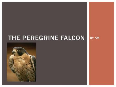 By AM THE PEREGRINE FALCON.  The peregrine falcon belongs to the Falconine family, its genus is called Falco, and its species is Raptor FAMILY, GENUS,