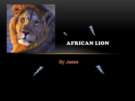 AFRICAN LION. The African Lion is a mammal. Its scientific name is panthera leo.