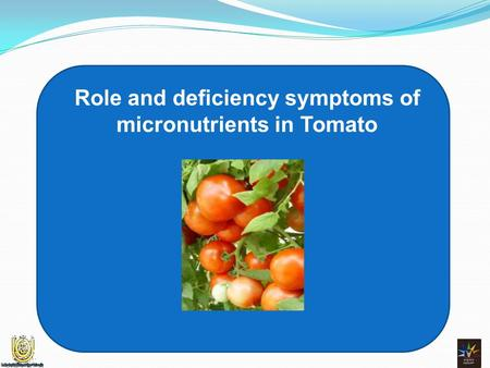 Role and deficiency symptoms of micronutrients in Tomato.