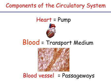 Blood = Transport Medium