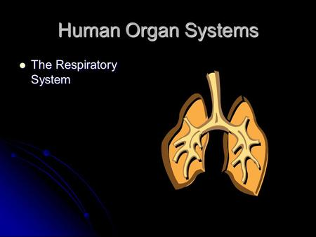 Human Organ Systems The Respiratory System The Respiratory System.