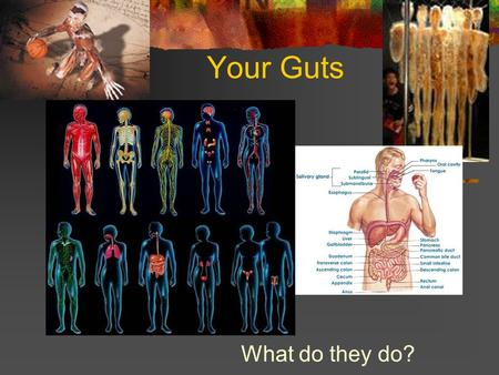 Your Guts What do they do?. The Skeletal System Provides a frame to support and protect body parts Protects organs like your brain Marrow in your bones.