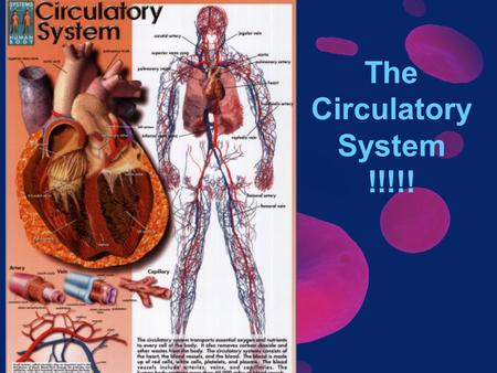 The Circulatory System !!!!!.  l?tracking=81347_A.