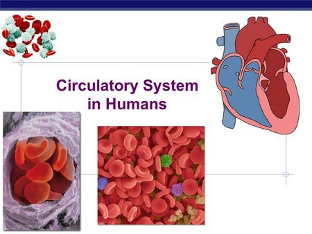 Regents Biology Circulatory System in Humans  Why do we need a circulatory system?  supplies in  fuel (sugars)  digestive system  oxygen  respiratory.