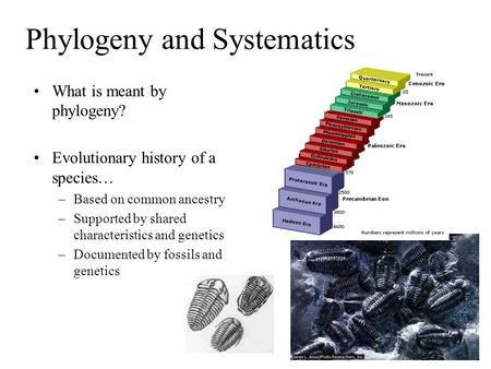 Phylogeny and Systematics What is meant by phylogeny? Evolutionary history of a species… –Based on common ancestry –Supported by shared characteristics.