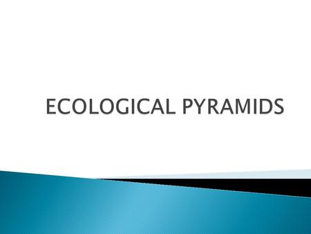 ECOLOGICAL PYRAMIDS An ecological pyramid is a diagram that shows the relationship amounts of energy or matter contained within each trophic level in.