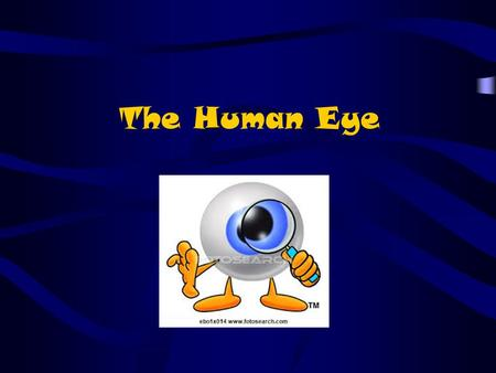 The Human Eye. A convex lens is the type of lens found in your eye. The lens takes light rays spreading out from objects and focuses the light, through.