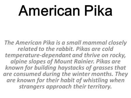 American Pika The American Pika is a small mammal closely related to the rabbit. Pikas are cold temperature-dependant and thrive on rocky, alpine slopes.