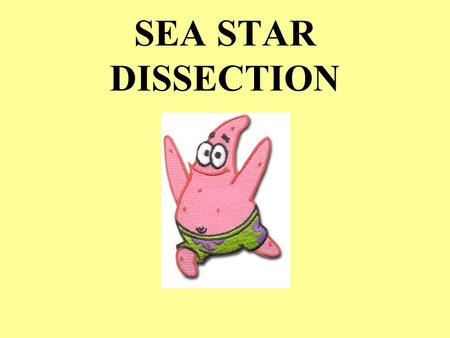 SEA STAR DISSECTION. SEA STAR LATIN meaning KINGDOM _____________ PHYLUM _____________________________ CLASS _______________________________ ANIMALIA.